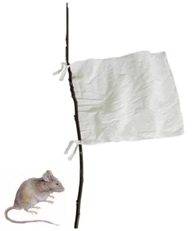 tikus-nyerah